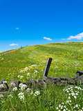 Grassy hill with wild flower meadow, dry stone wall and barbed wire fence in Yorkshire landscape