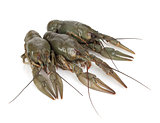 Three crayfishes
