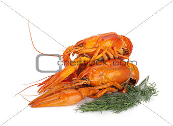 Boiled crayfishes with dill