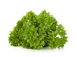Bunch of fresh green curly parsley