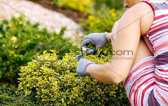 detail of woman hand gardening