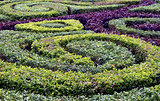 garden hedges background