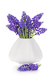 Blue hyacinth flowers in a vase