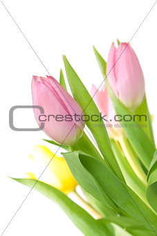 Beautiful pink tulip bouqet