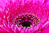Pink flower closeup