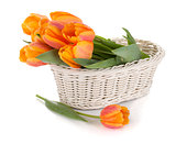 Orange tulips flowers