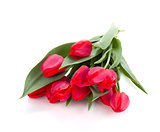 Lying red tulips bouquet