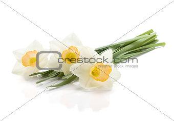 Three lying daffodils