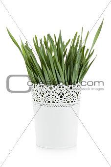 Green grass in flowerpot
