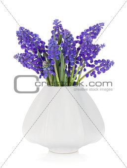 Blue hyacinth flowers in a vase