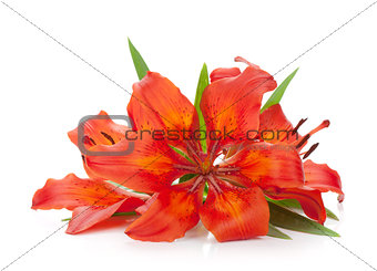 Three red lily