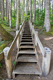 Wood Staircase in Hiking Trail