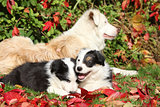 Two puppies lying in red leaves