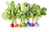 creative conception of fresh coloured radish