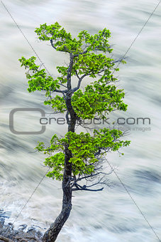 Single Tree By Motion Blurred River Water