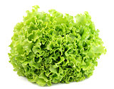 Lettuce isolated
