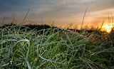 Picture of frost grass leaves at rising