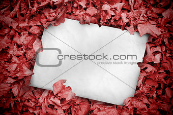 White poster buried into red leaves