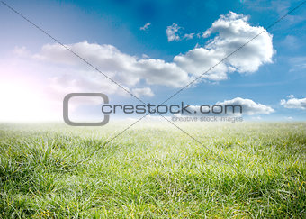 Beauitful green meadow