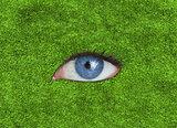 Blue eye over grass