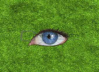 Blue eye over grass