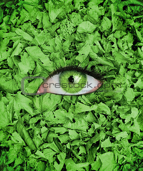 Green eye in the middle of leaves