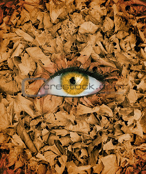 Yellow eye in the middle of leaves