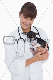 Attractive vet holding a cute chihuahua