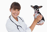 Attractive vet holding a chihuahua
