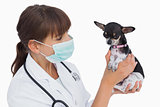 Vet with protective mask holding a chihuahua