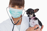 Smiling vet with protective mask holding a chihuahua