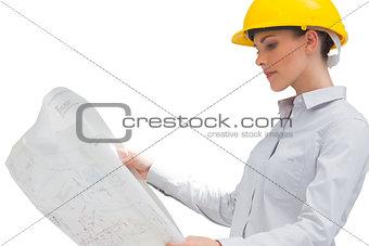 Architect reading a plan