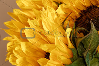 Crying Sunflower