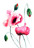 Poppy flowers illustration