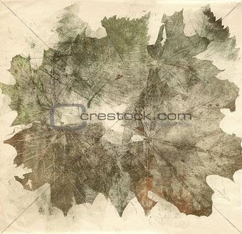 autumn leaves collage sepia background