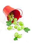 green gooseberry in metal bucket