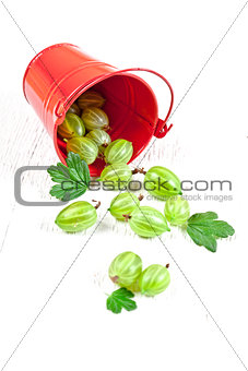 green gooseberry in metal bucket