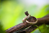 Two wedding rings on a vine branch