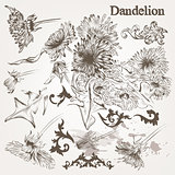 Collection of vector hand drawn  dandelion flowers and swirls fo