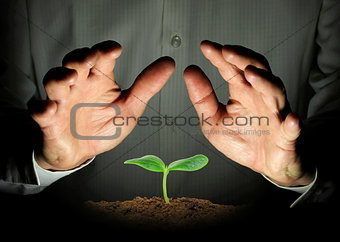small cucumber seedling, protected hands