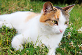 Cute little cat in laying in the grass