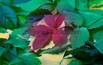 Background of multicolor leaves