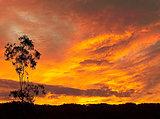 Fiery Australian sunset silhouette