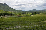 Landscape vineyard
