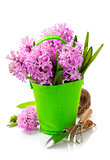 Beautiful Hyacinths and garden tools