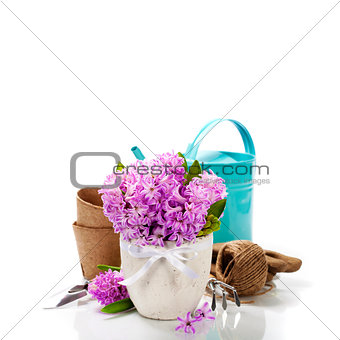Beautiful Hyacinths and garden tools