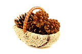 Pine cones in a basket.