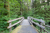 Wooden Foot Bridge Along Hiking Trail