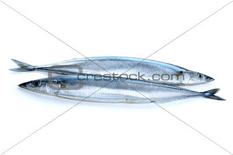 Two fresh pacific saury fishes