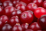 Some cranberries close-up.